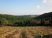Wishing we could plant the trees in Noto Region Forests in future
